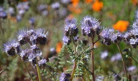 Der Garten im Juli – was jetzt zu tun ist