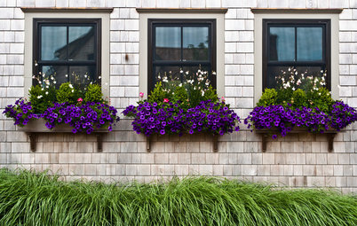 Window Box Planting Ideas for 4 Seasons of Interest