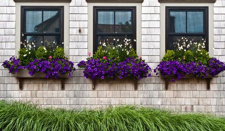 Window Box Planting Ideas for 4 Seasons of Interest