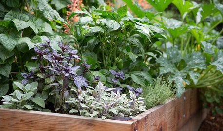 10 Steps to Get Your Edible Garden Started