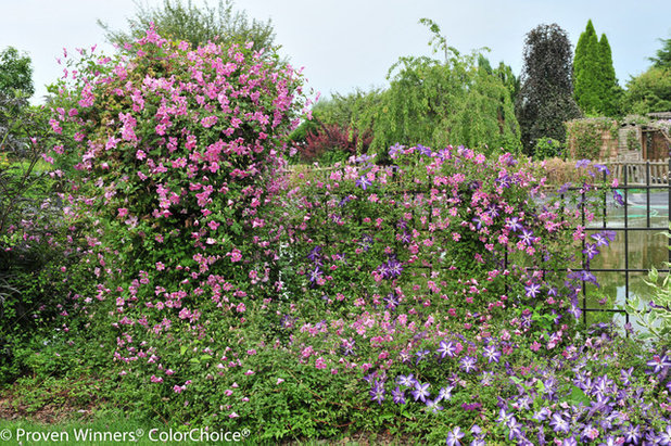 Eclectic Landscape by Proven Winners