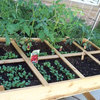 Square-Foot Gardening: A Simple and Efficient Way to Grow Your Own Food