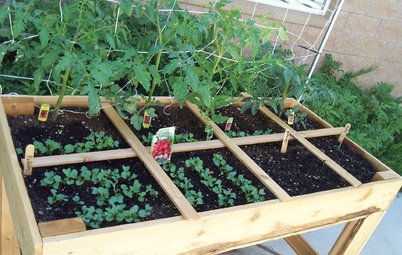 Maximize Harvests With Square-Foot Gardening