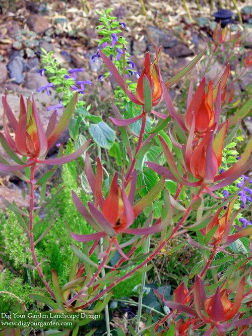 photo of a mediterranean full sun hillside drought tolerant landscaping in san francisco for summer save photo dig your garden landscape design