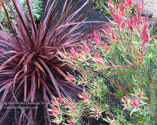 Plant combinations northern california gardens for Hearty low maintenance plants