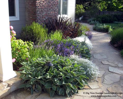 plant combinations northern california gardens. Black Bedroom Furniture Sets. Home Design Ideas