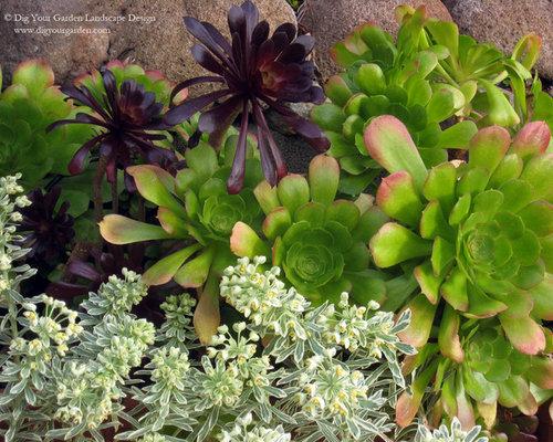 Plant Combinations Northern California Gardens