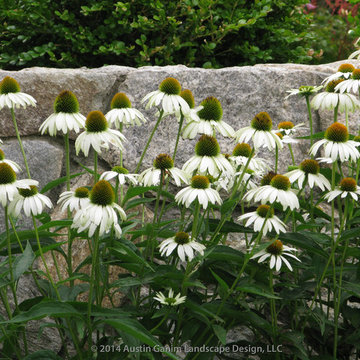 Plant Ideas & Colorful Combinations