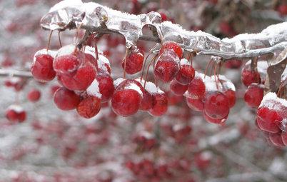 7 Cose che Puoi Fare per Apprezzare un Giardino Anche d'Inverno
