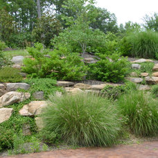 Traditional Landscape Plant Selections
