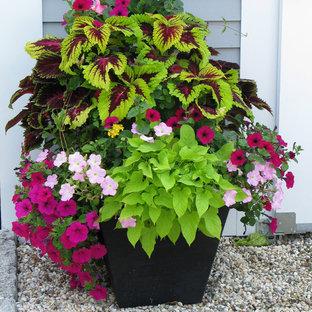 Immagine di un giardino classico esposto a mezz'ombra davanti casa in estate con un giardino in vaso