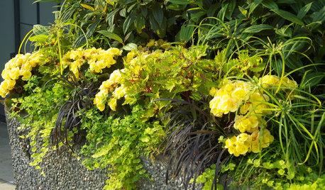 色合わせで楽しむ夏のおすすめ庭づくり