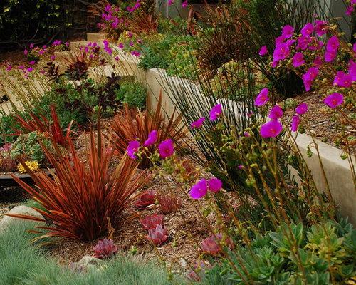 Drought tolerant plant northern ca home design ideas - Drought tolerant plants landscape design ...