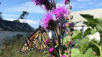 Pollinator Garden in Portland