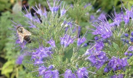 9 Herbstpflanzen, die Insekten lieben werden