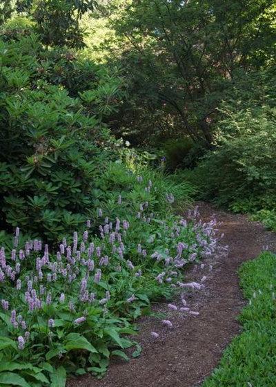 Let Nature Inspire Your Landscape Ideas for a Woodland Garden