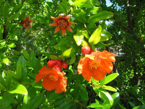 庭 Pomegranate