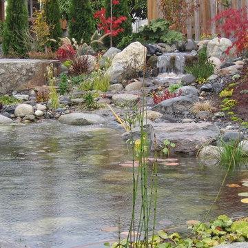 Ponds and Koi Ponds