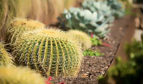 Winning Garden Combo: Golden Barrel Cactus and Other Succulents