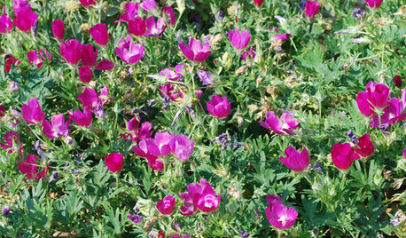 5 Essential Native Ground Covers for the Central Plains