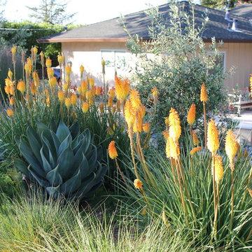 Portola Valley garden