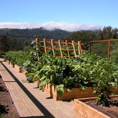 Inspiration for a mid-sized contemporary backyard vegetable garden landscape in San Francisco.