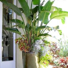 Tropical Landscape by Details Garden Design