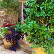 Traditional Landscape by Designs By Elizabeth
