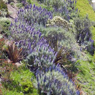 Foto di un grande giardino tropicale con un pendio, una collina o una riva