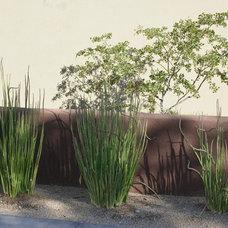 Modern Landscape by Prideaux Design