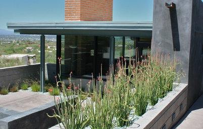 Great Design Plant: Slipper Plant