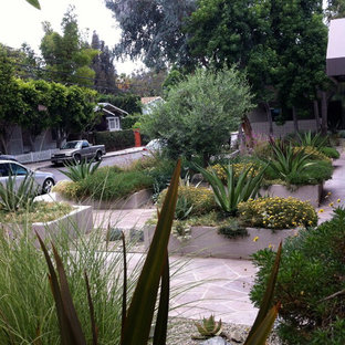 Inspiration for a large tropical drought-tolerant and partial sun backyard gravel landscaping in Los Angeles.