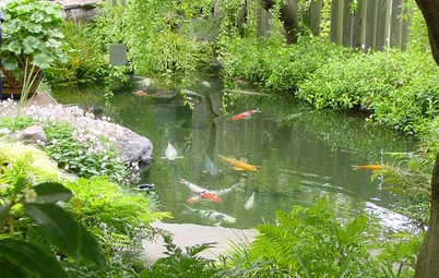 Build a Backyard Fish Pond Without Going Belly Up