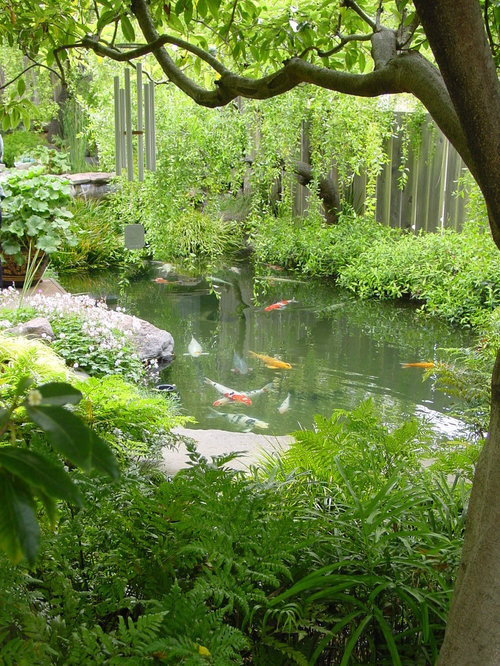 Plants Around Ponds Houzz