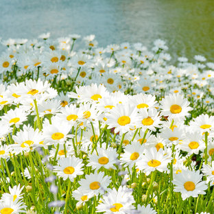 デンバーの大きいラスティックスタイルのおしゃれな裏庭 (池、日向) の写真