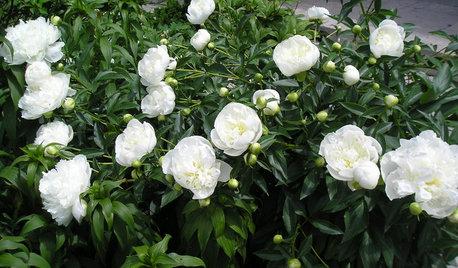 You Can Grow Prince Harry and Meghan Markle's Wedding Flowers