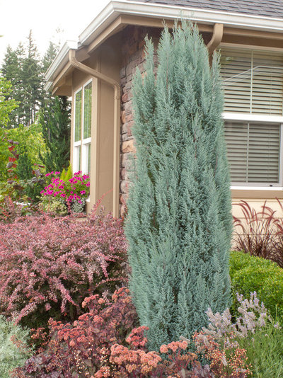 Narrow trees for tight garden spaces for Trees for small places