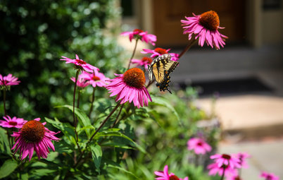 What to Know About Starting Your First Native Plant Garden