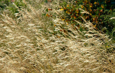 Great Design Plant: Purple Needle Grass, California's State Grass