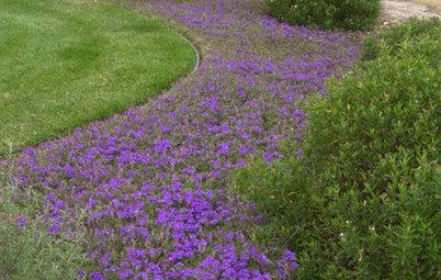 Bathe Your Garden in a River of Color