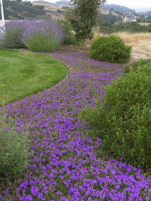 Flowering ground cover ideas pictures remodel and decor for Flowering landscape plants