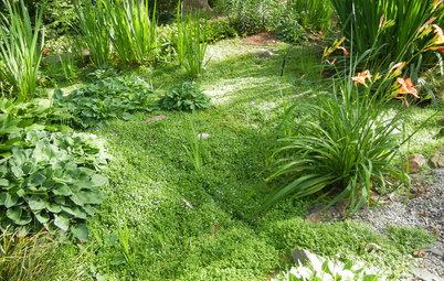 Houzz Call: Have You Installed a Rain Garden?