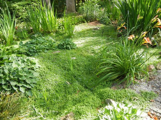Landscape Rain Garden