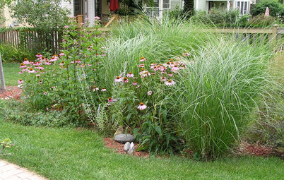 Great Home Project: Install a Rain Garden