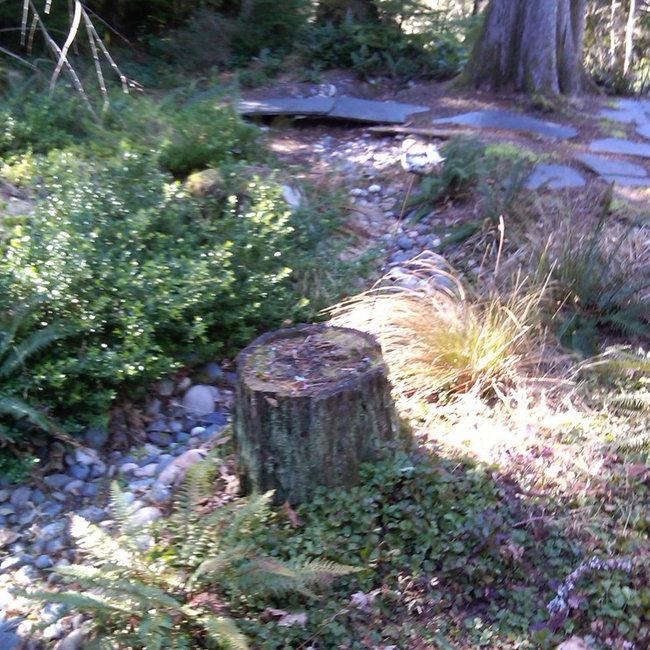 Rain Gardens Our Garden Island Sm