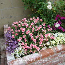 Traditional Landscape by Alford's English Gardens Inc