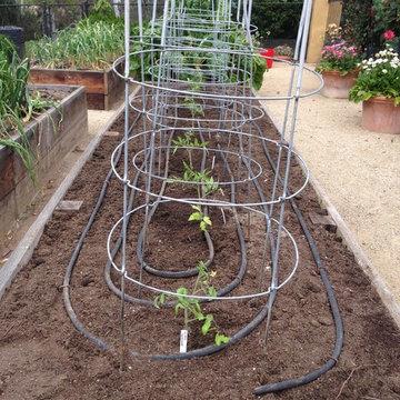 Rancho Santa Fe Edible Garden