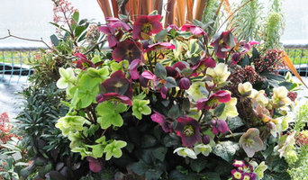 """Recipe for a Fabulous Pot - Hellebores """"Red and Green"""""""