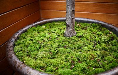 La mousse : une moquette naturelle pour votre jardin