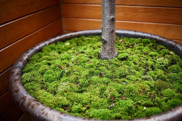Contemporain Jardin by New Eco Landscapes
